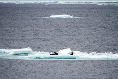 Антарктика - плавая лед - глобальное потепление Стоковое Изображение