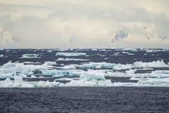 Антарктика - плавая лед - глобальное потепление Стоковое Фото