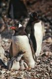 Антартическая одичалая жизнь Стоковая Фотография RF