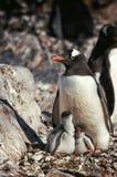 Антартическая одичалая жизнь Стоковые Фото