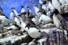 Антартические птицы на утесах Стоковая Фотография RF