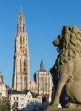 Антверпен - собор нашей дамы с статуей льва и улицей Suikerrui стоковая фотография rf