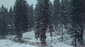 Антенна зимы молодого хода пар свадьбы и потехи иметь держа руки в тяжелых снежностях зимы к ели или видеоматериал