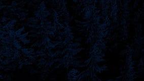 Антенна над лесными деревьями на ноче иллюстрация вектора