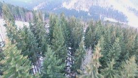 Антенна, панорама трутня леса зимы видеоматериал