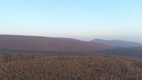 антенна 4K летания над красивым зеленым лесом сток-видео