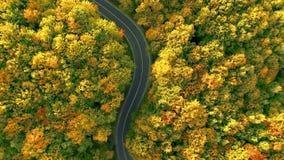антенна 4k над лесом осени в цветах падения сток-видео