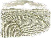 Антенна Woodcut поля Стоковые Фотографии RF
