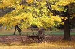Античная грабл сена в падении Стоковая Фотография