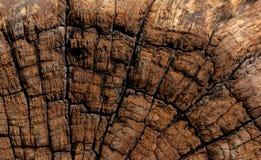 Античная деревянная текстура Стоковые Изображения