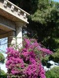 античная красотка Стоковая Фотография RF