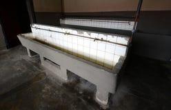 Античная раковина в покинутой тюрьме Стоковые Изображения RF