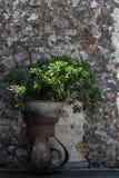 Античный плантатор перед каменной стеной стоковые изображения rf