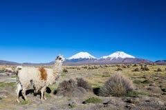 Андийский ландшафт с вулканом Prinacota, Боливией стоковая фотография