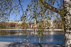 ландшафта фокуса поля дня облаков сини небо выставки заводов движения должного польностью зеленого маленькое не некоторые скачут  Стоковая Фотография