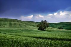 ландшафт голубого зеленого цвета Стоковое фото RF