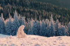 ландшафт зимы прикарпатский Стоковая Фотография RF