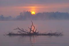 ландшафт осени туманный Стоковое Изображение RF