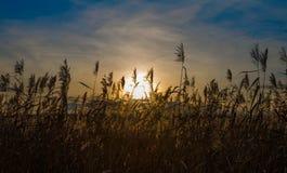 ландшафт осени цветастый против предпосылки голубые облака field wispy неба природы зеленого цвета травы белое Стоковые Фото