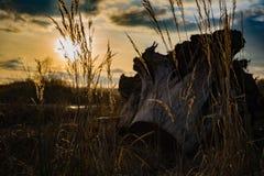 ландшафт осени цветастый против предпосылки голубые облака field wispy неба природы зеленого цвета травы белое Стоковое Изображение RF