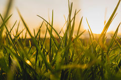 ландшафт осени цветастый против предпосылки голубые облака field wispy неба природы зеленого цвета травы белое Стоковое фото RF