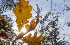 ландшафт осени цветастый против предпосылки голубые облака field wispy неба природы зеленого цвета травы белое Стоковые Изображения