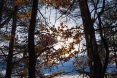 ландшафт осени цветастый против предпосылки голубые облака field wispy неба природы зеленого цвета травы белое Стоковые Изображения RF