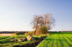 ландшафт поля зеленый стоковая фотография