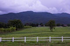 ландшафт поля зеленый Стоковая Фотография RF