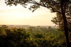 ландшафт пущи дня солнечный Стоковая Фотография RF