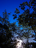 ландшафт пущи дня солнечный Стоковые Фото