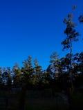 ландшафт пущи дня солнечный Стоковое Фото