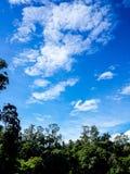 ландшафт пущи дня солнечный Стоковые Изображения RF