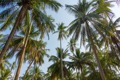 ландшафт тропический стоковое изображение
