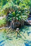 ландшафт тропический стоковые изображения