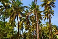 ландшафт тропический Стоковое фото RF