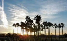 ландшафт тропический Стоковые Фотографии RF