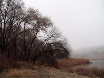 ландшафт туманный Стоковая Фотография