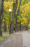 ландшафт упаденный осенью выходит желтый цвет дороги парка Стоковая Фотография