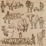 ландшафт фермы животных лето много sheeeps Нарисованный рукой пакет вектора Стоковые Изображения RF