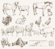 ландшафт фермы животных лето много sheeeps Стоковые Фотографии RF
