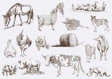 ландшафт фермы животных лето много sheeeps Стоковые Изображения RF