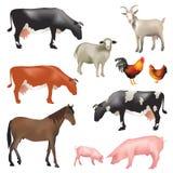 ландшафт фермы животных лето много sheeeps