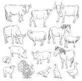 ландшафт фермы животных лето много sheeeps Стоковое Изображение