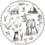 ландшафт фермы животных лето много sheeeps Стоковая Фотография RF
