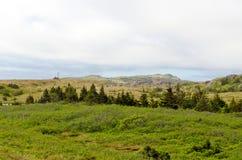 ландшафт newfoundland Стоковые Фотографии RF
