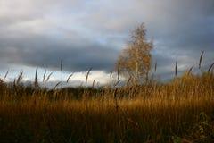 ландшафт overcoast с березой Стоковое Изображение