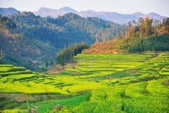 ландшафт yunnan фарфора стоковые изображения rf