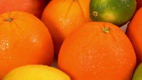 Апельсины, грейпфрут, и другое приносить сток-видео