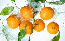 Апельсины мочат выплеск стоковое фото